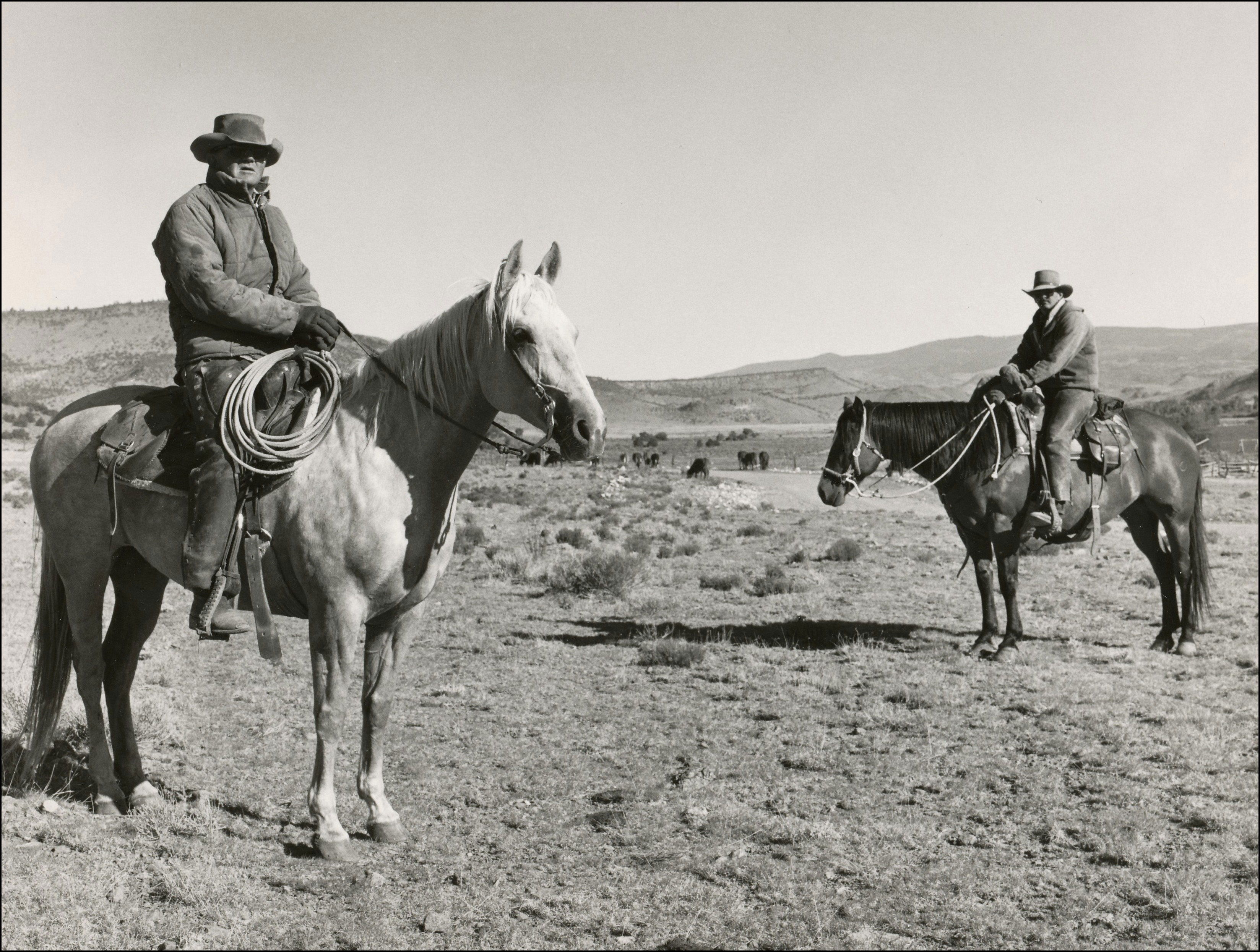 two ranchers on horses with cattle in the background