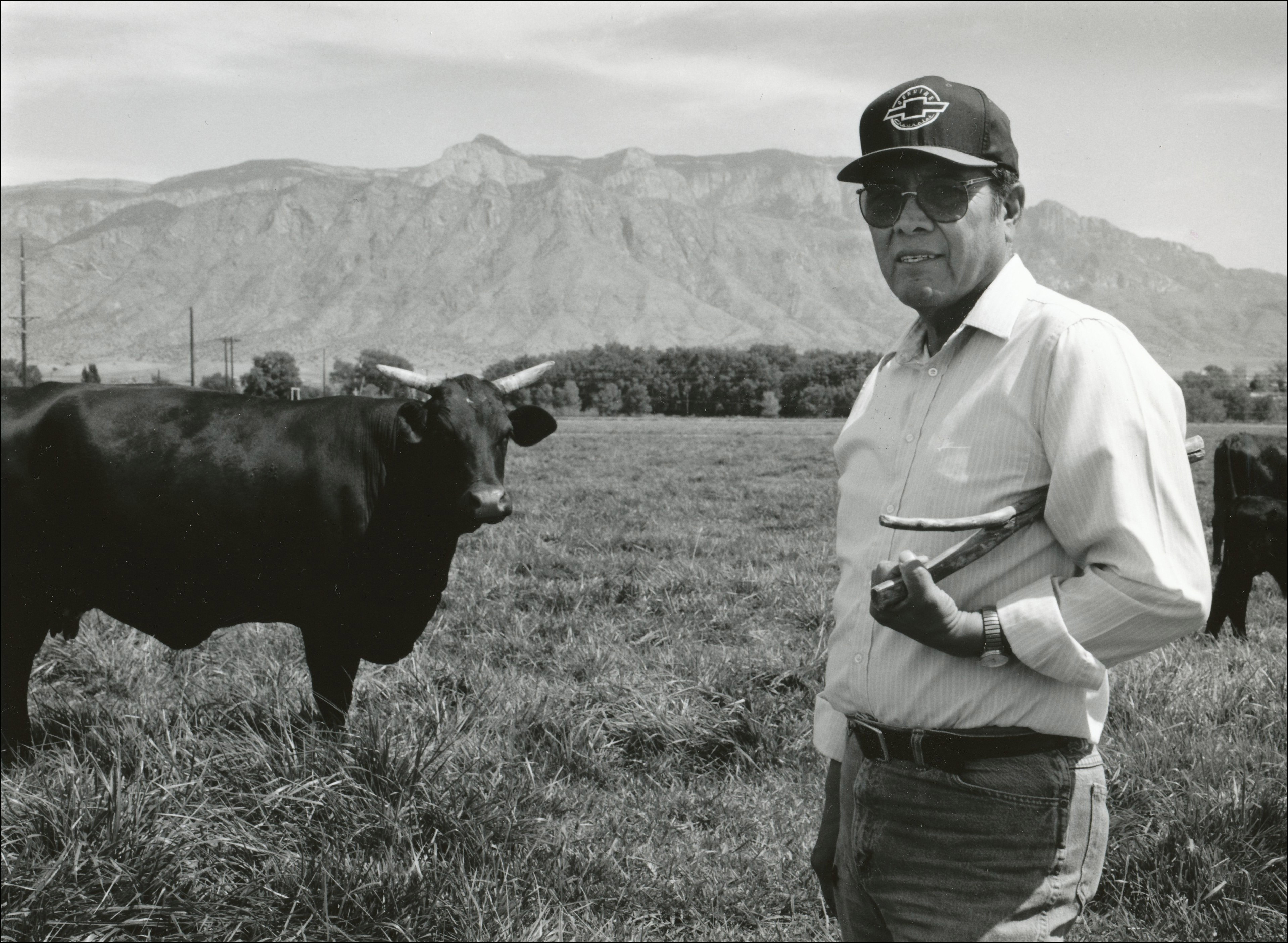 Rancher in baseball cap standing in pasture holding a stick with a cow with horns in behind and to the left of him