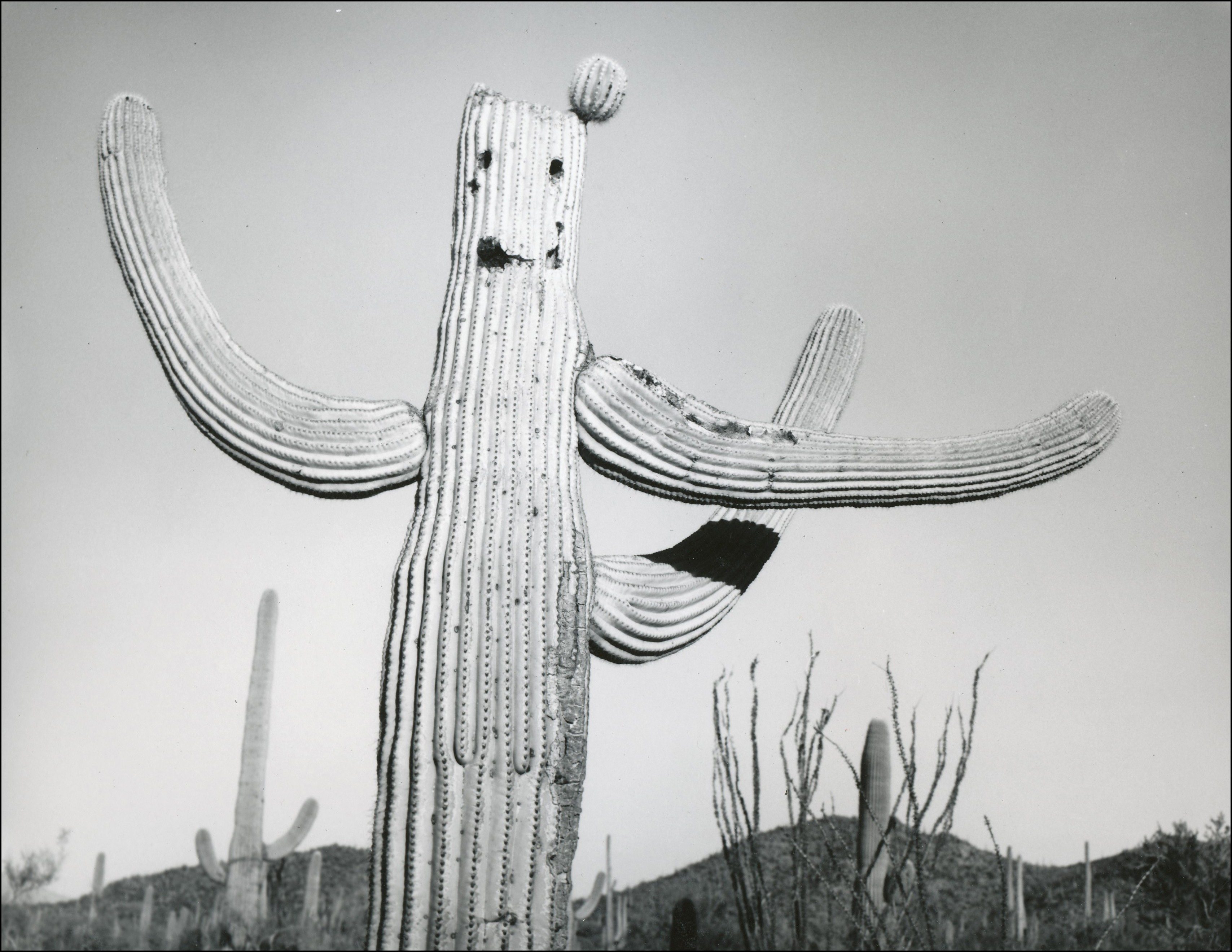 Saguaro cactus with three arms and holes from wood peckers that make a smiley face
